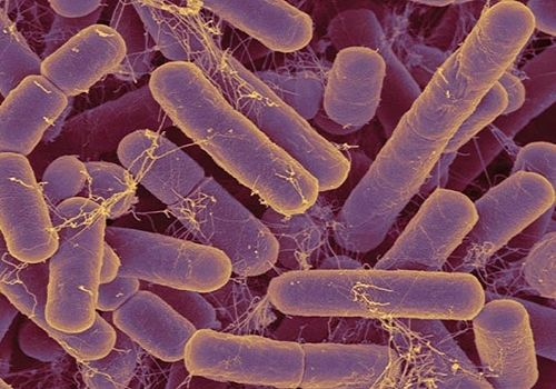 Getting to Know the Microbiome, one of the 'Top 10 scientific breakthroughs in 2011' by China.org.cn.
