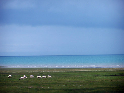 Around Qinghai Lake,one of the 'Top 10 best cycling routes in China' by China.org.cn.