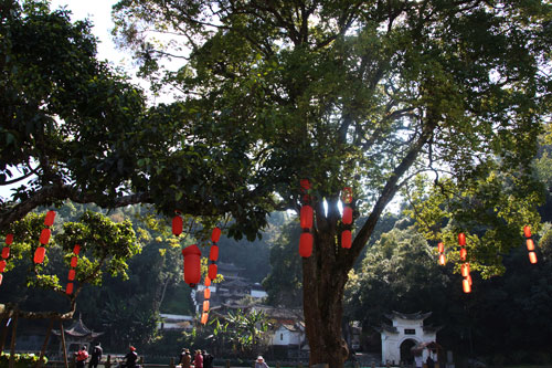 The robust branches of a thousand year old banyan tree bear many red lanterns, reminding visitors of the excitement of Spring Festival Holiday.[Photo:CRIENGLISH.com]