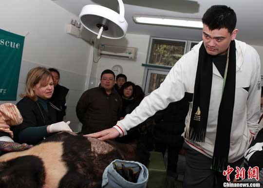 Former NBA superstar Yao Ming is lending his voice to the chorus of animal activists, calling for an end to bear bile farming here in China.