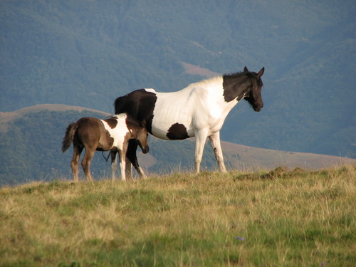 Wild horses in Serbia. [File photo]
