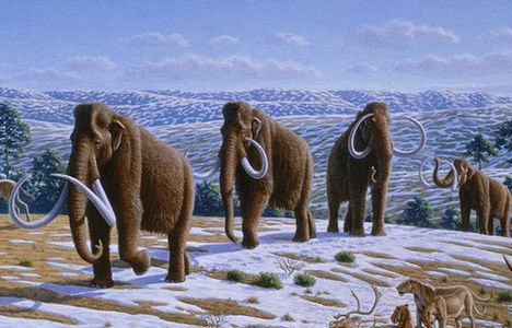 File photo of woolly mammoths.