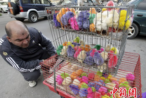 A businessman sells dyed chicks in a street of Beirut, Lebanon, on March 28 before the coming of the festival Easter. Buying colorful chickens is a tradition for Lebanese people to celebrate Easter. 2