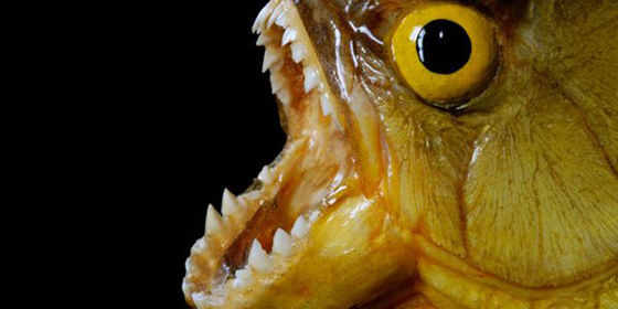 Top 13 scariest freshwater animals