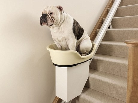 Chunky the bulldog hitches a ride up the stairs on the World's first stair lift for overweight pooches. [Agencies]