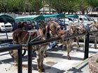 Donkey taxi, a new transport alternative in Italy