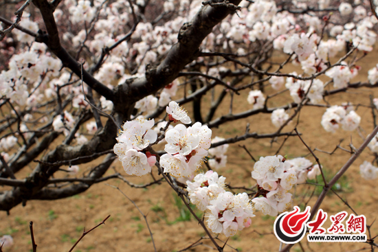 Flowers blossom to welcome Spring in Shandong