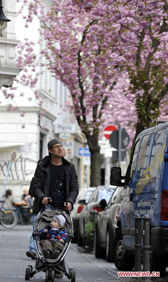 A man pushes a stroller as he looks at the cherry blossoms in Bonn, Germany, April 11, 2012. Cherry blossoms began to bloom in Germany as the temperature keeps climbing up. (Xinhua/Ma Ning)