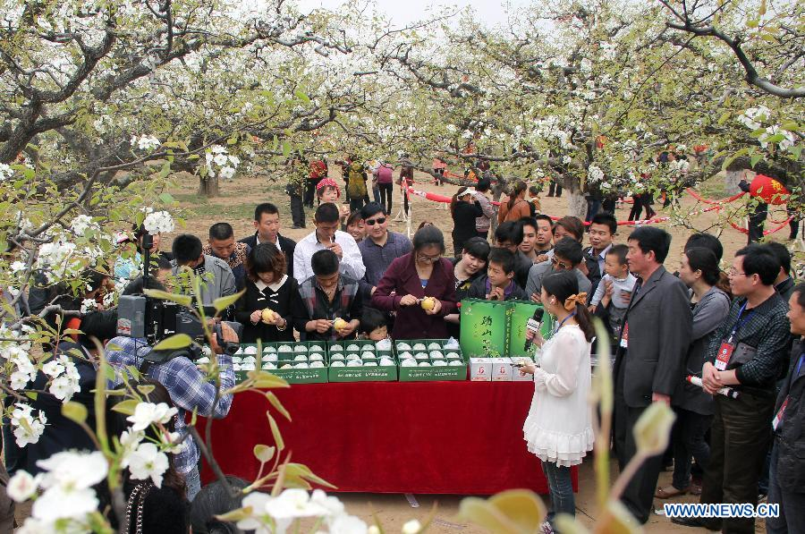 Tourists are interested in a peeling competition at a pear orchard in Dangshan County, east China's Anhui Province, April 9, 2012. As the pear tree flowers are in full blossom in spring, local government organized many cultural and traditional activities in local pear orchards recently, which attracted many tourists. (Xinhua/Cui Meng)