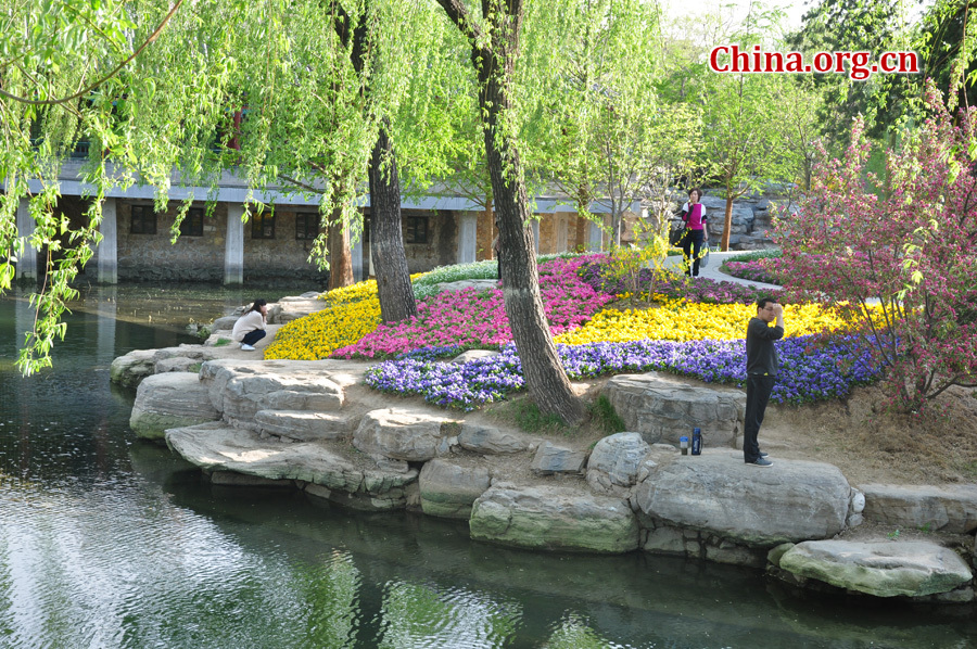 Photo taken on April 13 shows the spring flowers are in full blossom at Zhongshan Park, Beijing. [China.org.cn/ by Yuan Fang]