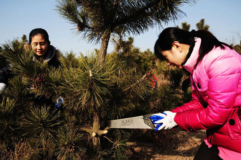 Residents trim trees in the economic development zone in Qingdao, Shandong province, in March. [China Daily]