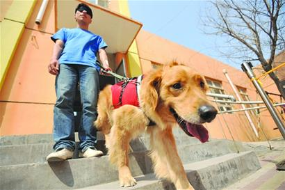 Work Needed To Open Eyes To Guide Dogs China Org Cn