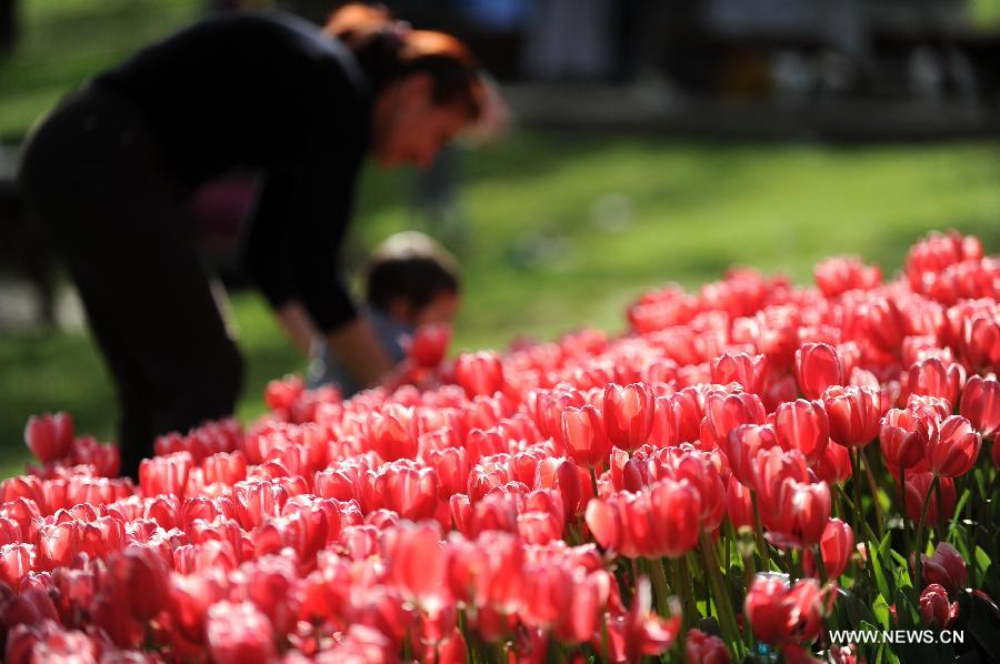 Tourists are seen among tulips at Emirgan Park in Istanbul, Turkey, on April 25, 2012. Over 11.6 million tulips blossom in the park in April, attracting many citizens and tourists. (Xinhua/Ma Yan)