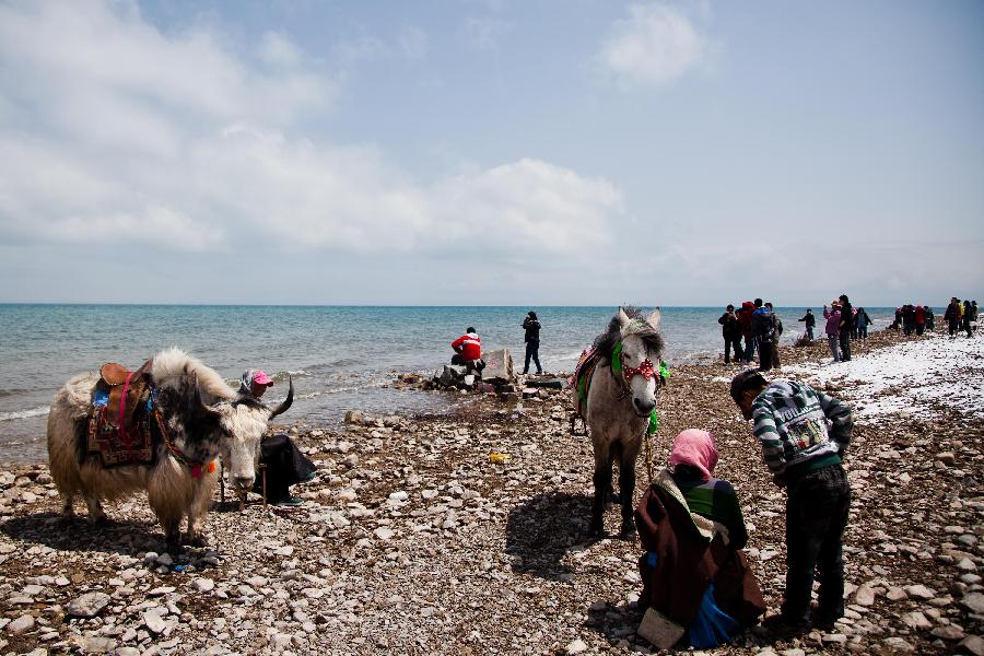 Tourists visit Qinghai Lake in northwest China's Qinghai Province, April 30, 2012. (Xinhua/Wu Gang) 1 2 1 2