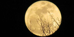 Supermoon lightens the night sky