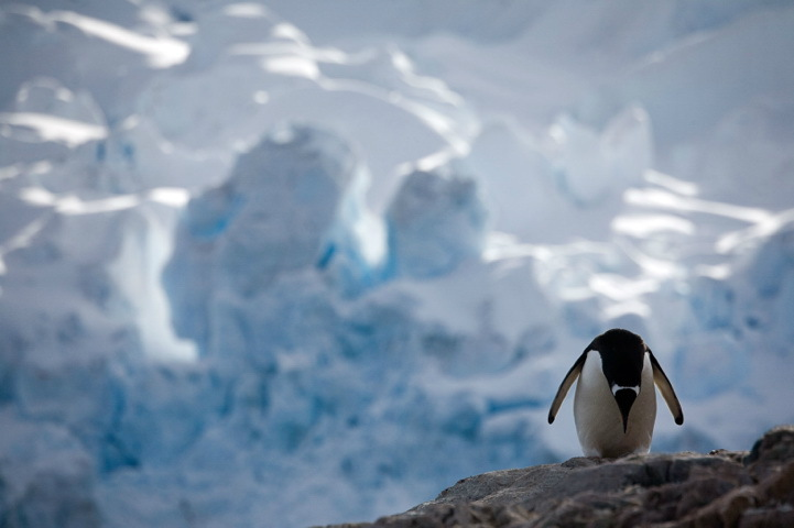 Photographer Camille Seaman uses a camera to record the life of penguins in Antarctica. [sina.com]