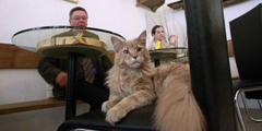 Coffee time with feline friends in Austria's cat cafe