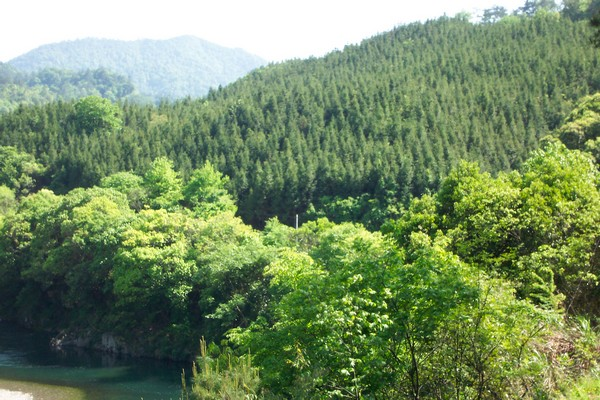 China's forest area had increased to 195 million hectares in 2012 from 134 million hectares in 1992 . [Xinhua file photo]