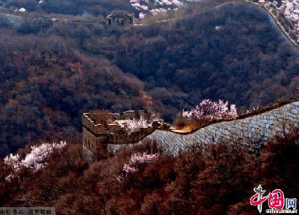 The Jiankou Great Wall (Arrow Lock) is located in Huairou County, 73 km north from Beijing City. It connects with the Mutianyu Great Wall 10 km to the east, and with the Huanghuacheng Great Wall to the west. This section was built in 1368 during the period of the Ming Dynasty.It is built of large white hill rocks which makes it very prominent from a distance.[ Photo / China.org.cn ]