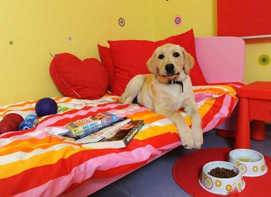 Luxury Dog Hotel For Classy Canines China Org Cn