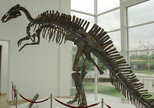 Mandschurosaurus amurensis Riabinin, one of the 'Top 10 remarkable Chinese dinosaurs' by China.org.cn.