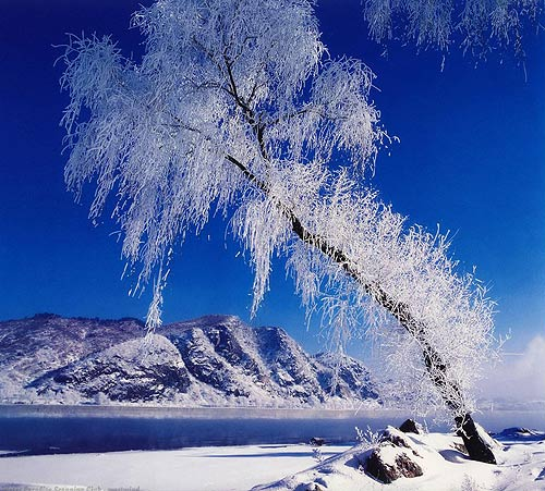 Rime in Jilin, one of the 'top 10 attractions in Jilin, China' by China.org.cn.