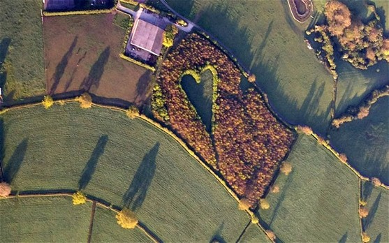 The giant heart formed with 6000 oak trees which Winston Howes planted in memory of his late wife Janet.[Agencies]