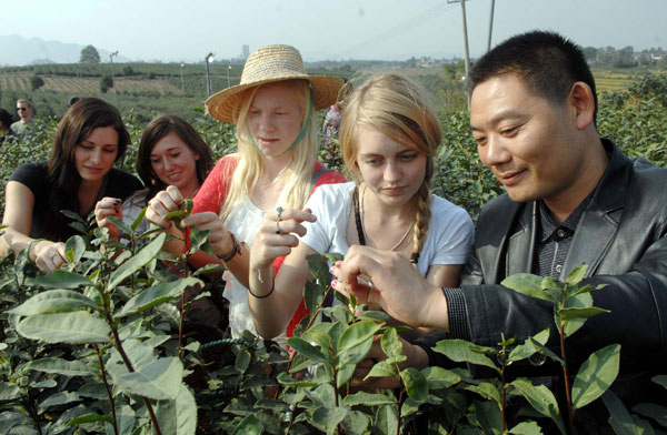 University students from the United States who are taking part in an internship program in China learn how to pick tea at a farm in Zhenjiang, East China's Jiangsu province. [Photo/Xinhua]