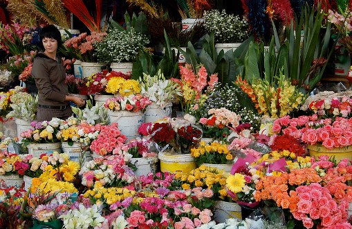 Flower selling in Cape Town- A way of life