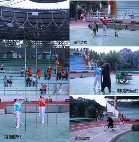 The ongoing animal 'Olympics' at Shanghai Wildlife Park has come under fire over criticism from animal protection organizations, which describes the games as 'animal abuse.'[Photo/xinmin.cn]