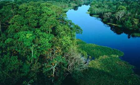 Brazil- A Rainforest Biome by Kelly Collins on Prezi