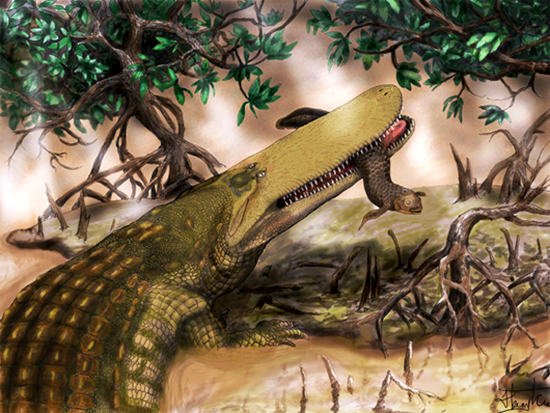 Prehistoric Crocodile,one of the 'Top 10 new species in the world 2012'.