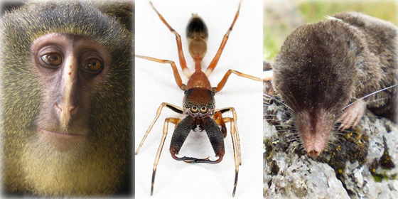 Top 10 new species in the world 2012