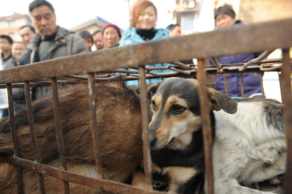 Dogs wait to be slaughtered in front of the gate of a residential area in Hefei, Anhui province, recently. Residents have asked the police to intervene, but they are powerless to stop the slaughter because no laws or regulations bar the slaughter of dogs.[Photo/China Daily]