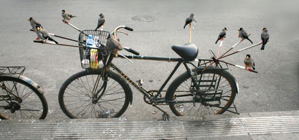 A bird enthusiast displays his pets at Qingta Hutong. [Photo: CRIENGLISH.com/William Wang]