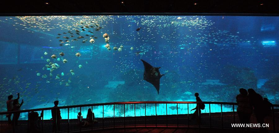 Singaporean Resorts World Sentosa 39 S S E A Aquarium The