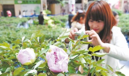 Luoyang Peony Cultural Expo kicks off in Qingdao