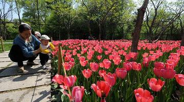 CHINA-CHANGCHUN-TULIPS (CN)