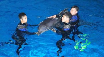 #CHINA-SHANDONG-PENGLAI-DOLPHINS FROM JAPAN-ARRIVAL(CN)
