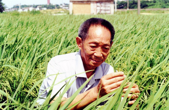 The 'super rice,' one of the most productive in the world, was developed by Chinese scientist Yuan Longping. [File photo]
