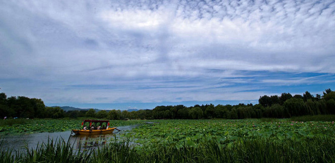 Summer scenery of Old Summer Palace