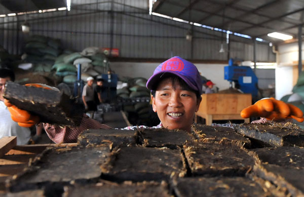 A worker checks bricks of compressed tea at a factory in Menghai county, Yunnan province, on May 19. The province is a major tea producer and boasts a few national names such as Pu'er.[Photo/Xinhua]