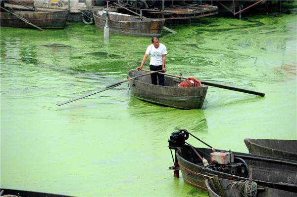 Harmful algae plagues E China's Chaohu Lake