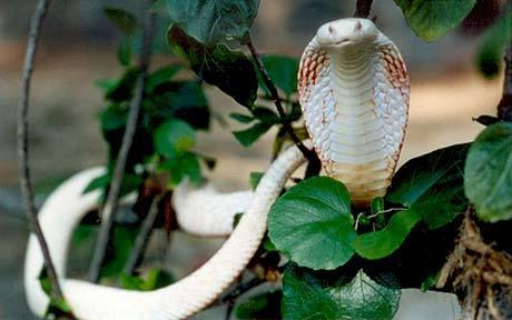 Top 10 Rarest Albino Animals In The World China Org Cn