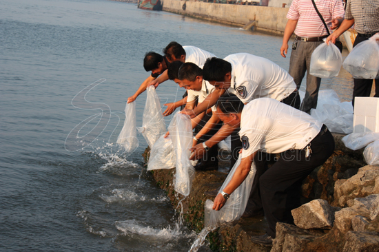 1 million fish fries were released into the Bohai Sea in Penglai, Shandong Province, on July 25. Authorities of the province will spend 150 million yuan this year to cultivate and release fish fry into the sea.