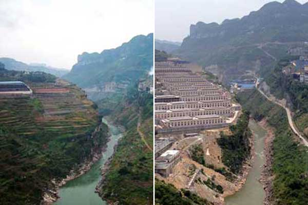 Fish ecosystem on Yangtze 'on verge of collapse'