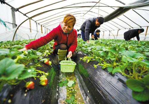 Farmers in China are expecting to see fresh opportunities emerging for new family farming. [Photo:CNTV]