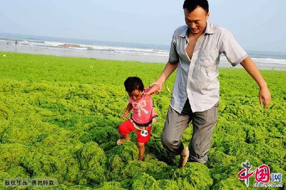 New nano-tech could treat China's lake pollution - China org cn