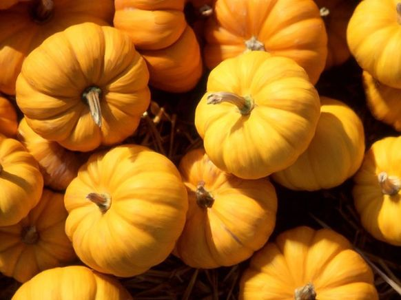 Pumpkin, one of the 'Top 10 Mid-Autumn Festival foods in China' by China.org.cn.