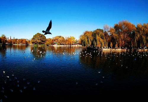 Green Lake Park, one of the 'top 10 attractions in Kunming, China' by China.org.cn.